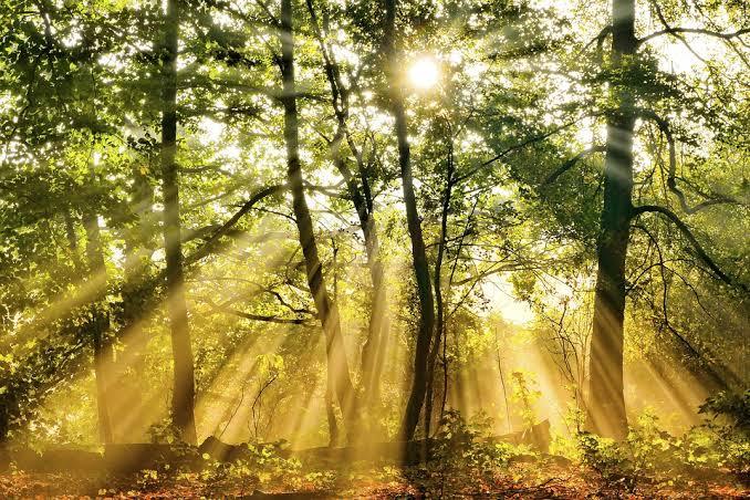 Energia Solar e sustentabilidade: economia para o presente e responsabilidade com o futuro